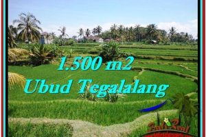 Magnificent PROPERTY 1,500 m2 LAND IN Ubud Tegalalang FOR SALE TJUB528