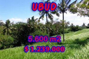 Land in Bali for sale, Magnificent view in  Ubud Center – TJUB299
