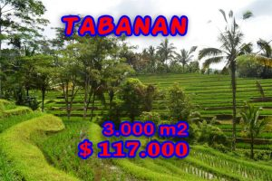 Land for sale in Bali 30 Ares rice fields view by the river  in Tabanan