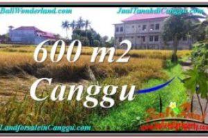 Beautiful 600 m2 LAND IN CANGGU FOR SALE TJCG211
