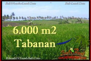 Affordable PROPERTY 6,000 m2 LAND SALE IN TABANAN BALI TJTB267