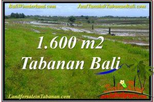 Affordable 1,600 m2 LAND FOR SALE IN Tabanan Selemadeg TJTB310