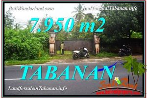 Beautiful 7,950 m2 LAND FOR SALE IN Tabanan Bedugul TJTB331