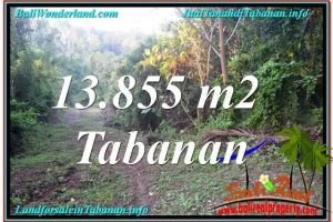 FOR SALE Beautiful LAND IN TABANAN TJTB335