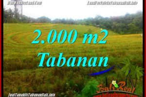 Magnificent PROPERTY 2,000 m2 LAND IN Tabanan Selemadeg FOR SALE TJTB356