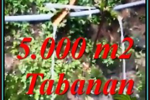 Magnificent PROPERTY 5,000 m2 LAND SALE IN TABANAN TJTB476