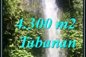 SELEMADEG BARAT BALI 4,300 m2 LAND FOR SALE TJTB480