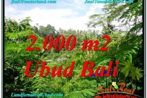Beautiful LAND FOR SALE IN UBUD TJUB611