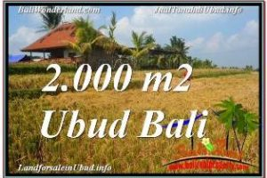 Beautiful PROPERTY 2,000 m2 LAND SALE IN UBUD TEGALALANG TJUB669