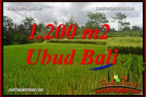 FOR sale Affordable Property 1,200 m2 Land in Ubud Tegalalang Bali TJUB693