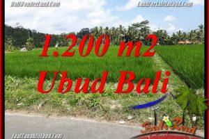 FOR sale 1,200 m2 Land in Ubud Bali TJUB694