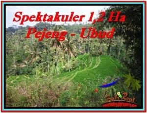 Beautiful 12,000 m2 LAND SALE IN UBUD BALI TJUB520