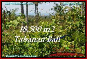 Exotic 18,500 m2 LAND IN TABANAN BALI FOR SALE TJTB232