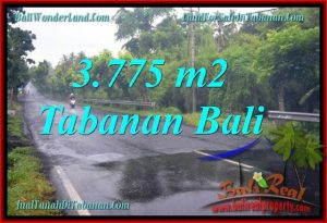 Affordable PROPERTY 3,775 m2 LAND SALE IN TABANAN BALI TJTB271