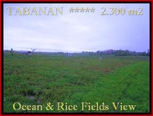FOR SALE Affordable 2.300 m2 LAND IN TABANAN TJTB184