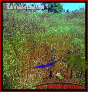 Magnificent 10,900 m2 LAND SALE IN Tabanan Selemadeg TJTB199