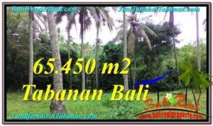 Beautiful 65,450 m2 LAND FOR SALE IN Tabanan Selemadeg BALI TJTB290