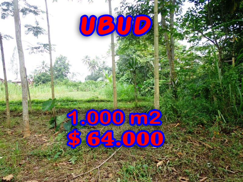 Land-in-Sale-for-sale