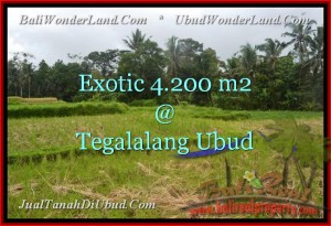 Magnificent PROPERTY 4,200 m2 LAND FOR SALE IN UBUD BALI TJUB461