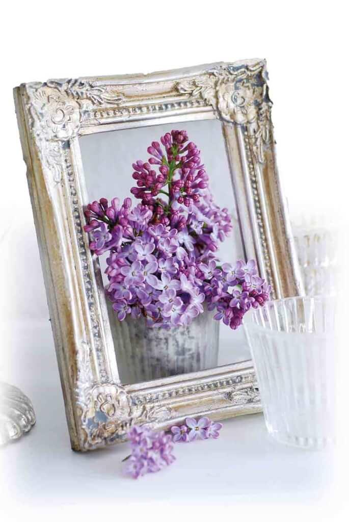 Blhende Blumen Das Ganze Jahr so bl ht der blumengarten