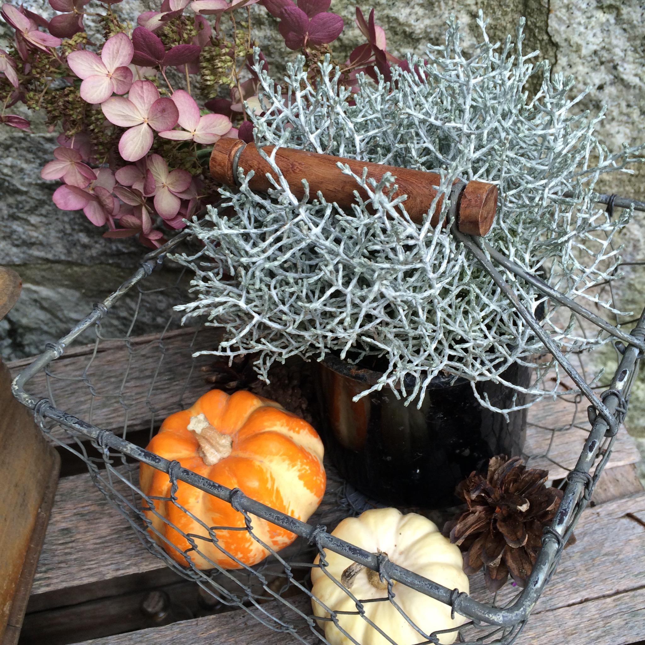 HerbstDeko 2016  VintageLook  Holzscheite
