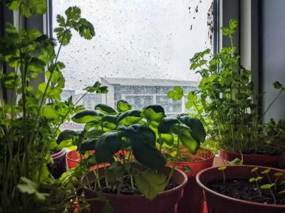 Kitchen herbs gardening plans