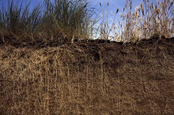 Long Perennial Roots in Soil