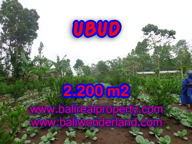Land in Ubud for sale, Stunning view in Ubud Tegalalang Bali – TJUB348