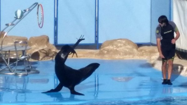 Экскурсия в дельфинарий из Хургады : шоу морских животных