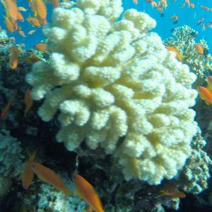 Морскме экскурсии Шарм Эль-Шейха : кораллы и рыбы Красного моря