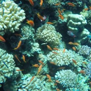Excursion de plongée à Tiran depuis Charm el-Cheikh
