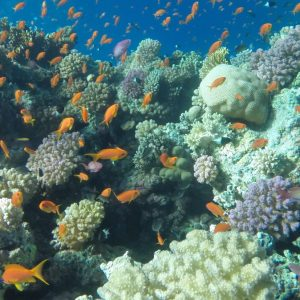 Excursion diving in Ras Mohammed from Sharm El-Sheikh