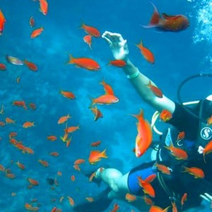 Scuba Diving in Hurghada: A tourist dives underwater in the Red Sea, where beautiful corals and fish
