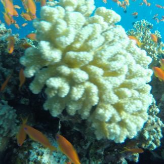 Sea trips in Sharm El-Sheikh