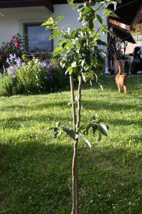 Jakob Fischer Apfelbaum mit meinem 4beinigen Freund