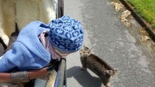 Das Landkind liebt Katzen - naja, sagen wir mal: es liebt Tiere!