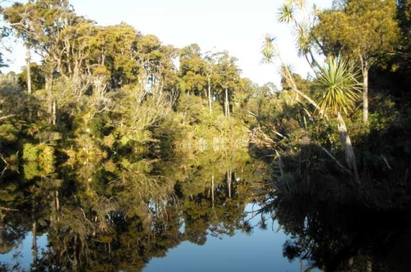 Ship's Cove primordial swamp