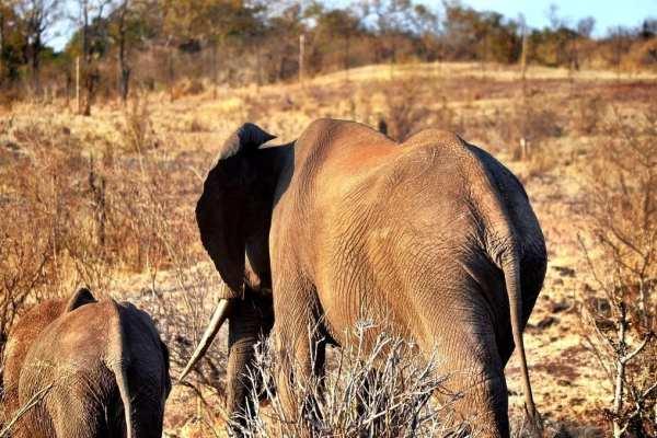 Elephants Zimbabwe