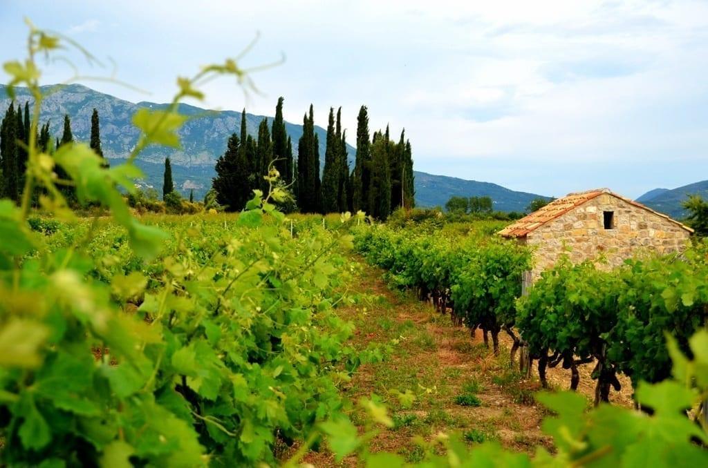 Croaita wine