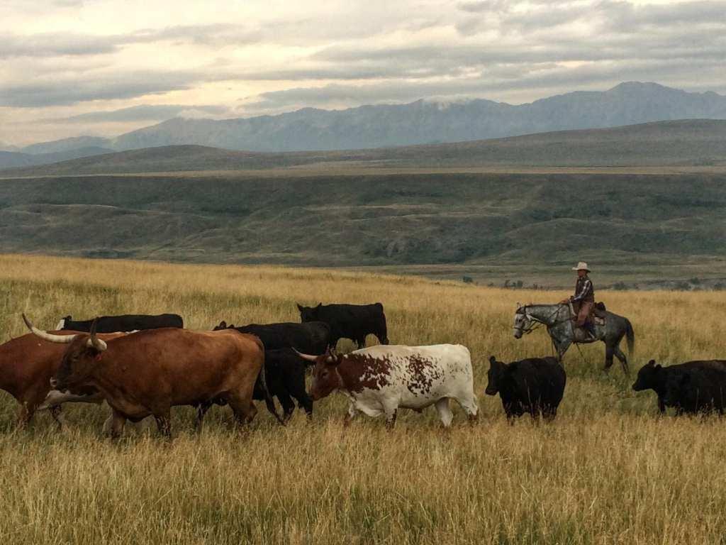 Alberta Cowboy Canada