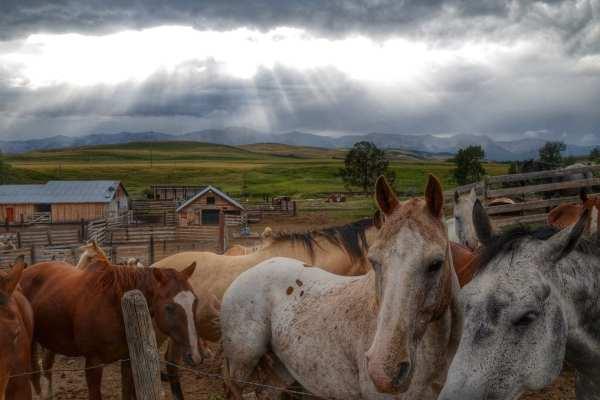 Horses in Alberta, Canada