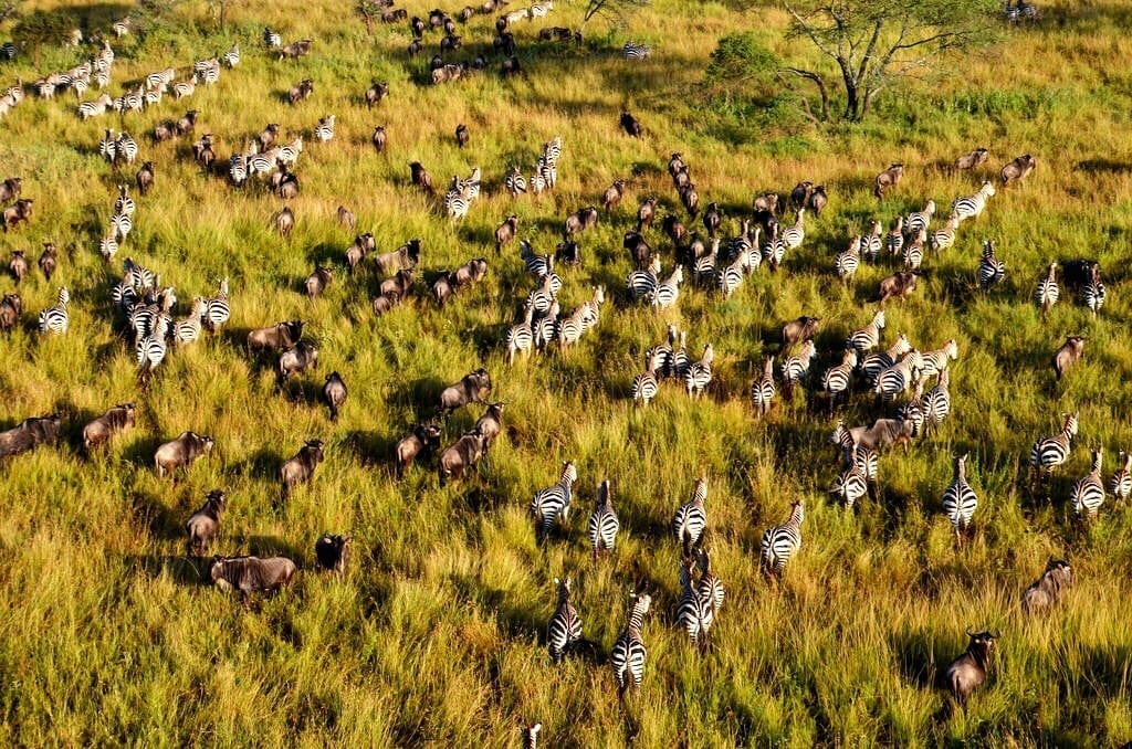 Great Migration Serengeti Tanzania