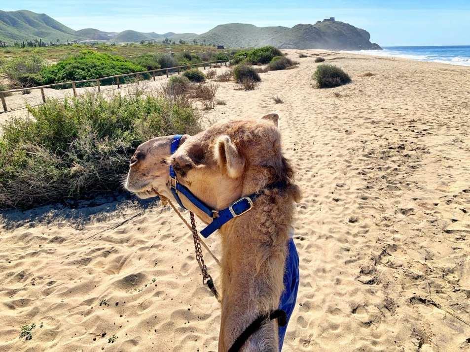 Camel Cabo Mexico