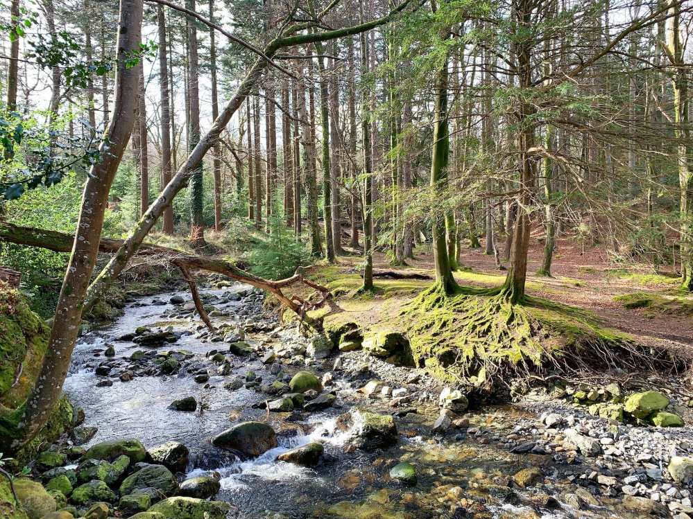 Tollymore Forest Park in Northern Ireland