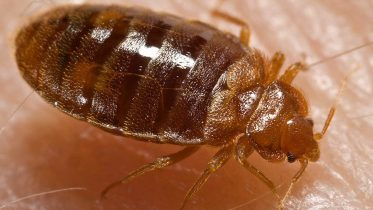 Don't Let Bed Bugs Bite Your Buy to Let Profits