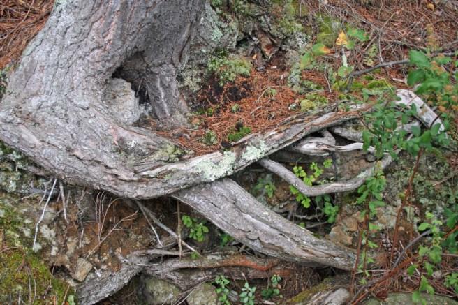 Maureen Gordon - Adirondacks Roots