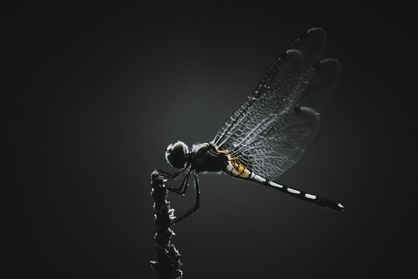 dragonfly-5639879-1920