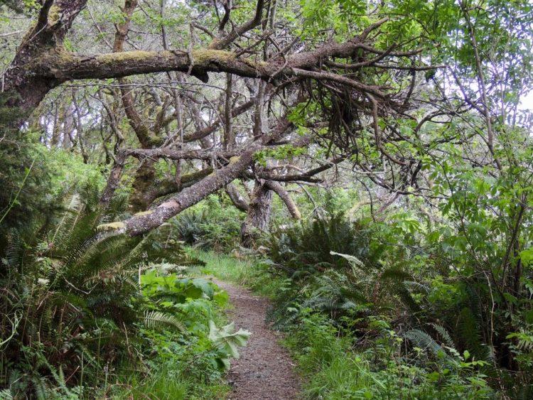 Near southwestern end of Rim Trail