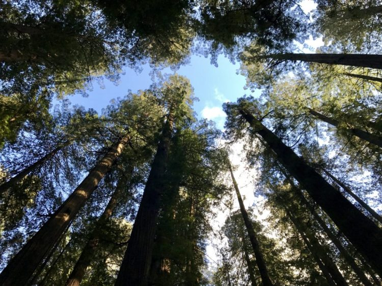 Beautiful view looking up into the Founders Grove