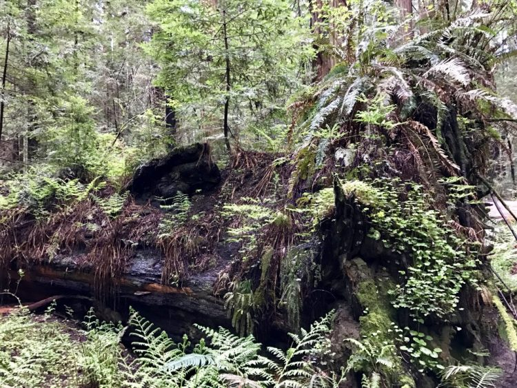 Forest reclaiming a downed tree